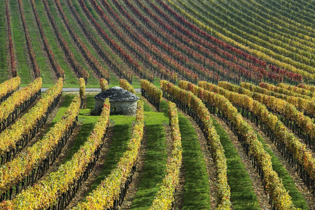 Vineyards in autumn colours